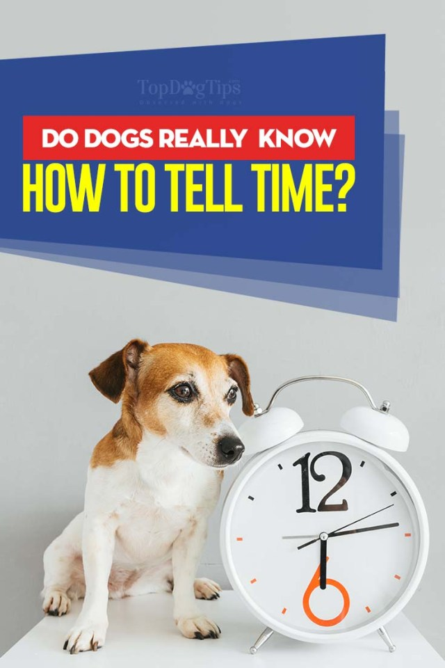 Do Dogs Really Know How to Tell Time - Here is the answer