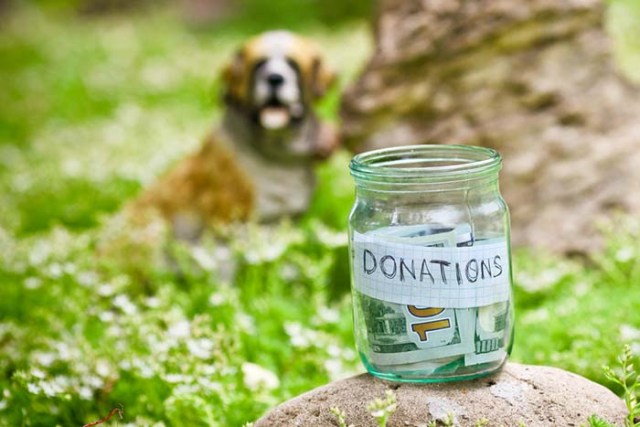 Donate in Cash or Kind