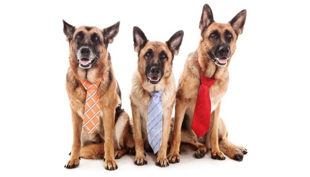 Elect board of directors for dog rescue