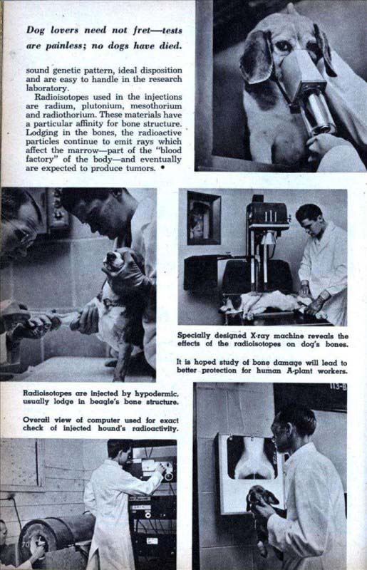 Media coverage for the experiments described the lab studies as painless