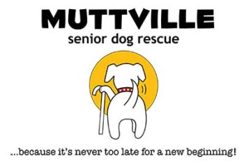 Muttville - Best Animal Charities