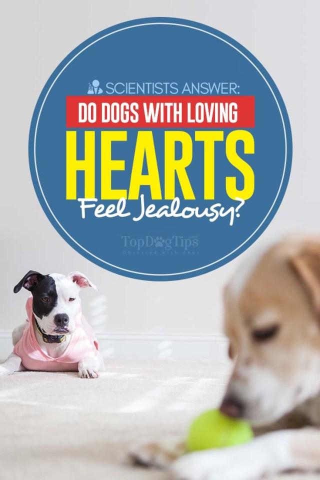 Science Says Loving Dogs Still Feel Jealousy