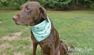 The Dapper Dog Subscription Box Review