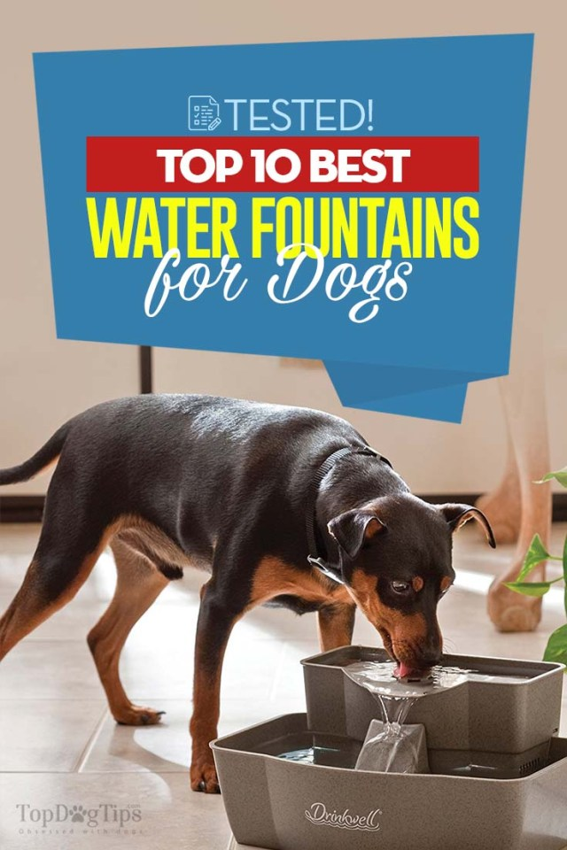 Top 10 Best Dog Water Fountain Choices for Indoors and Outdoors