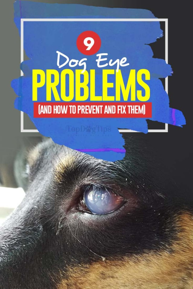 Top 9 Dog Eye Problems with Pictures