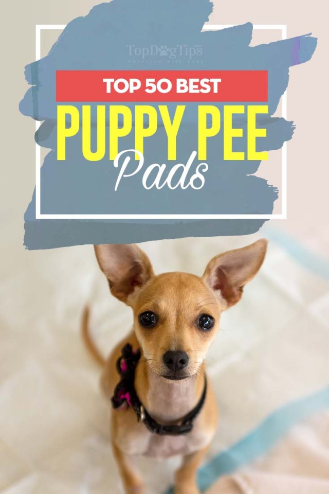 Top Rated Best Puppy Pee Pads