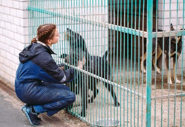 Volunteer at the Shelters