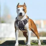 Babyltrl Big Dog Harness No-Pull