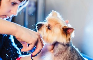 8 Ways to Make Your Dog Enjoy Grooming at a Pet Groomer's Studio