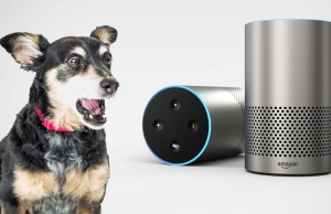 Alexa Skills for Dog Owners - 16 Ways It Can Help You Be a Better Owner