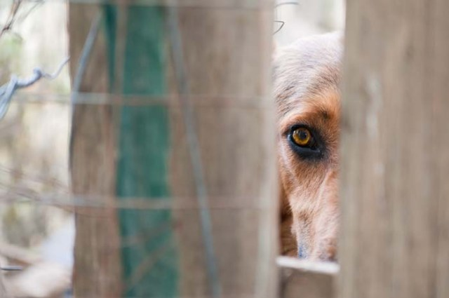 Anxiety in Shelter Dogs