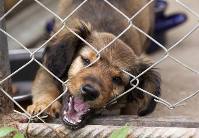 Destructive Behavior in Shelter Dogs