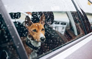 Elon Musk Exploring 'Dog Mode' Feature to Safely Leave Pets in Tesla Cars