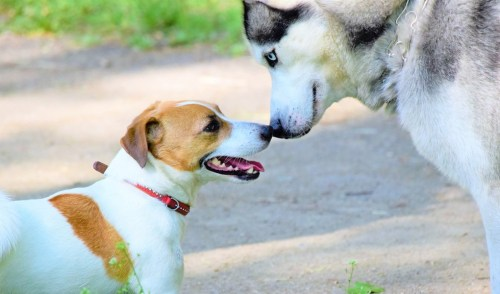 Two dogs getting to know each other