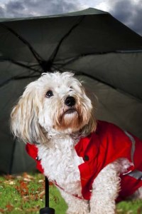 Invest in a Dog Raincoat