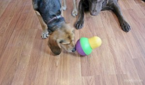 StarkMark Bob-A-Lot Interactive Dog ToyBest interactive toy for chewers