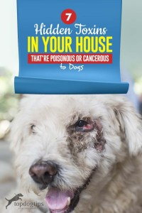 The 7 Hidden Toxins in Your House That're Poisonous or Cancerous to Dogs