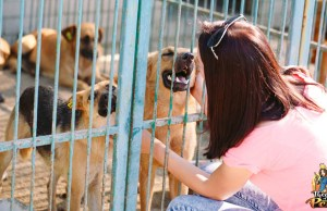 The No-Kill Initiative and How to Help Dogs in Shelters