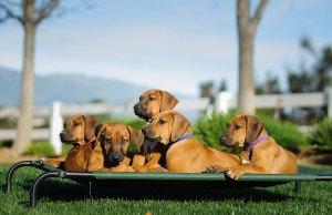 Top 50 Most Tough Dog Beds
