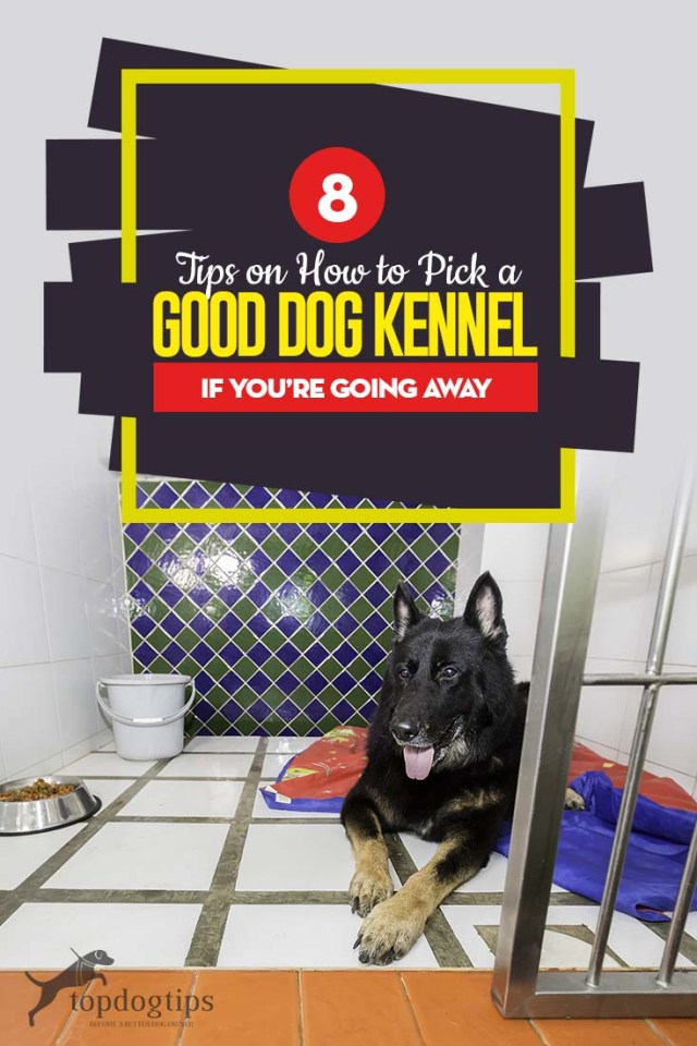 Top 8 Tips on How to Pick a Good Dog Kennel If You're Going Away
