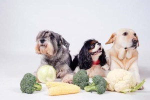 Vegetables for dogs are one of the best among human foods dogs can eat