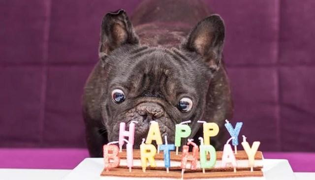 Bake a Dog Friendly Birthday Cake