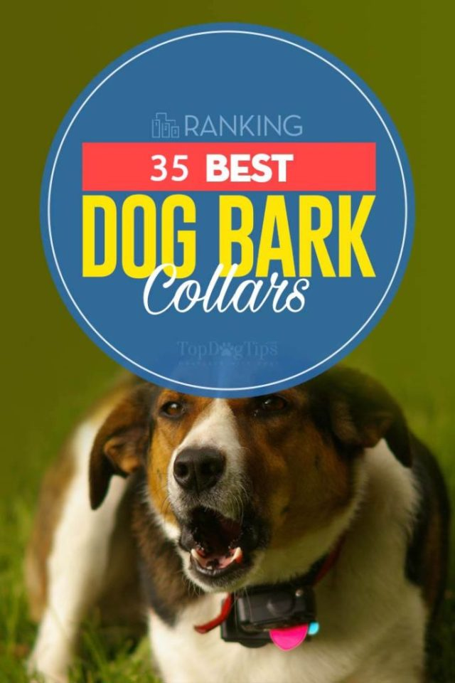Best Dog Bark Collar Brands Ever