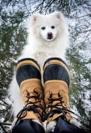 Dog Booties or Socks