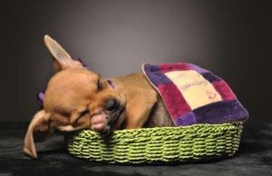 How to Get Your Dog to Sleep on a Dog Bed