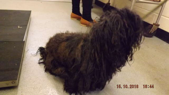 Locals in Norfolk worked together to groom and give medical attention to 15 dogs, mostly Newfoundlands, abandoned by the roadside.