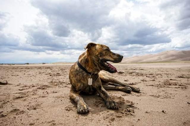 Plott is among the true American dog breeds
