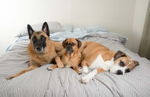 Ready for Dog No. 3 - Signs You're Ready to Welcome Another Pup