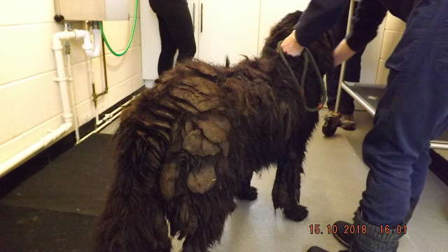 Seven More Abandoned Matted Dogs