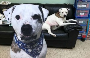 Shelter Dog Stars in 'The Office' Parody to Help Him Get Adopted