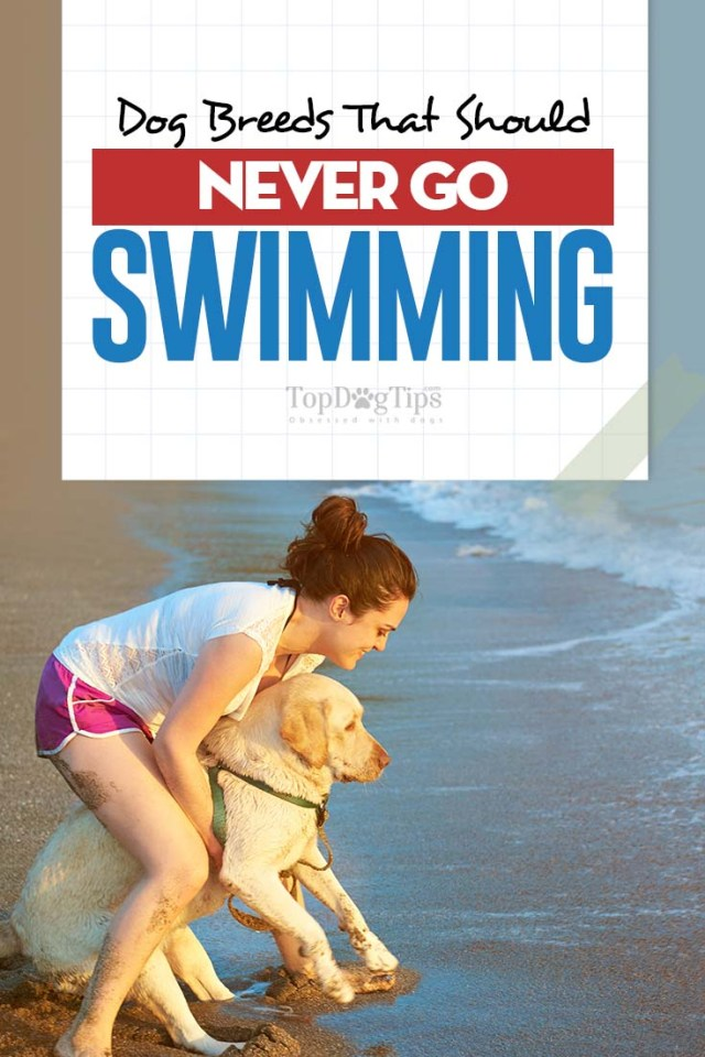 The 20 Dog Breeds Worst at Swimming