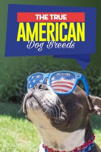 The 20 Most American Dog Breeds