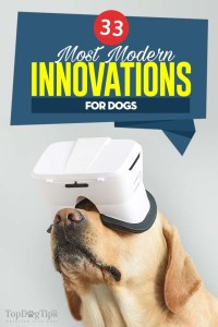 The 33 Modern Innovations for Dogs That We Love