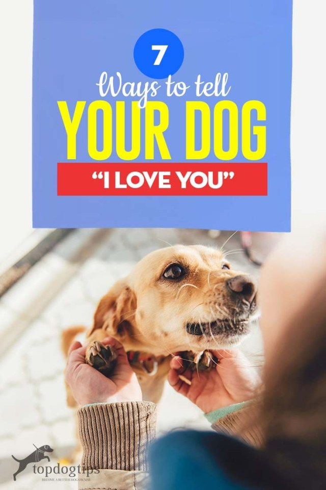 The 7 Ways to Tell Your Dog I Love You