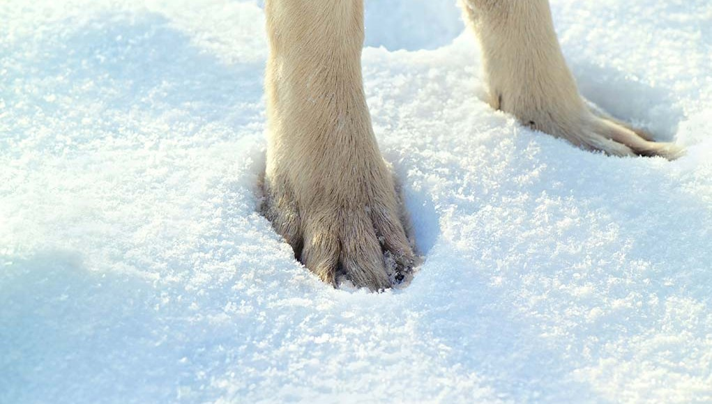 The Best Dog Paw Protection in the Winter