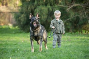 The Dog May Perceive the Child as a Puppy