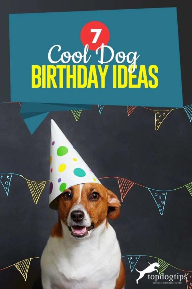 Top 7 Dog Birthday Ideas