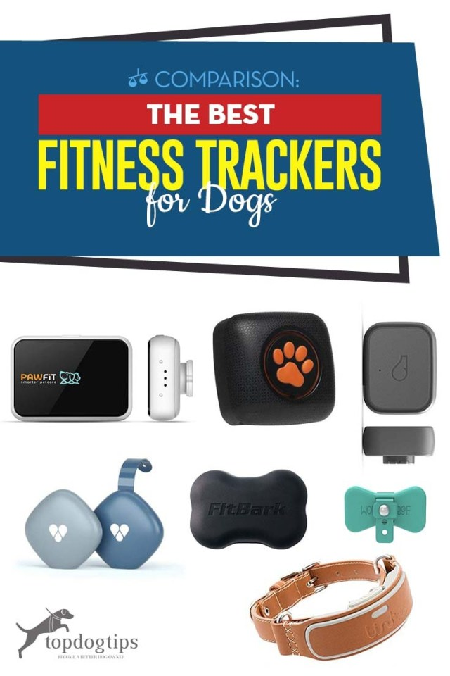 Top Rated Best Fitness Trackers for Dogs