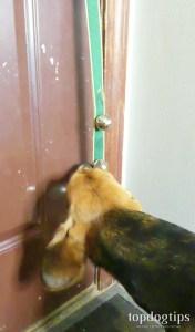 Testing a Dog Doorbell