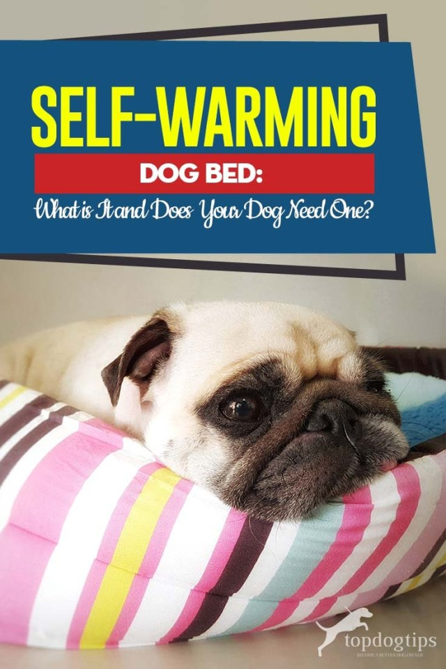 Buying Guide to Self-Warming Dog Beds