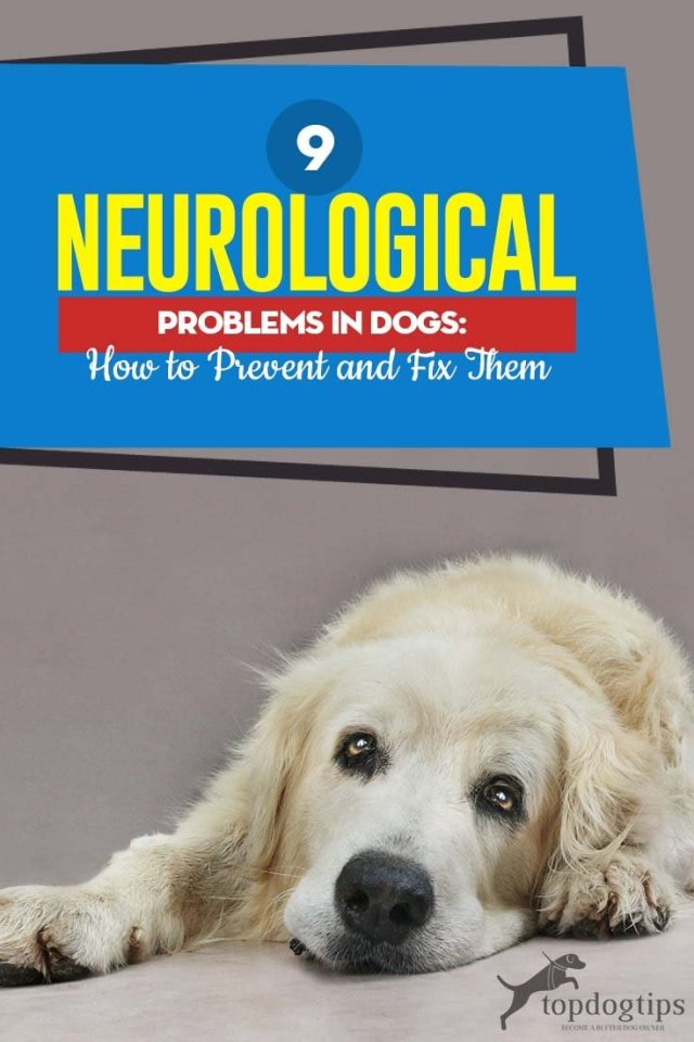 Common Neurological Problems in Dogs