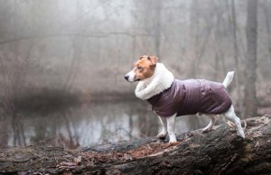 Dog Winter Coats - Do They Actually Help Our Pets Stay Warm