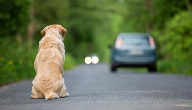 Dogs Fear of Abandonment