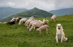Homesteading for Dog Owners