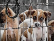 How Dog Smuggling Business Works