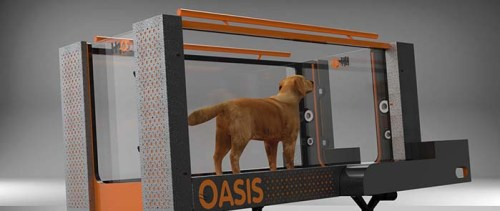 Hydrotherapy treadmill for dogs